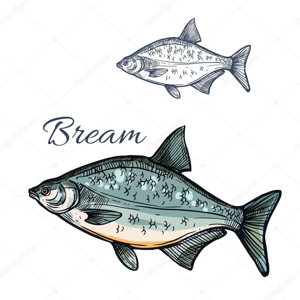 Ic ne de croquis isol s de br me poisson vecteur image - Croquis poisson ...