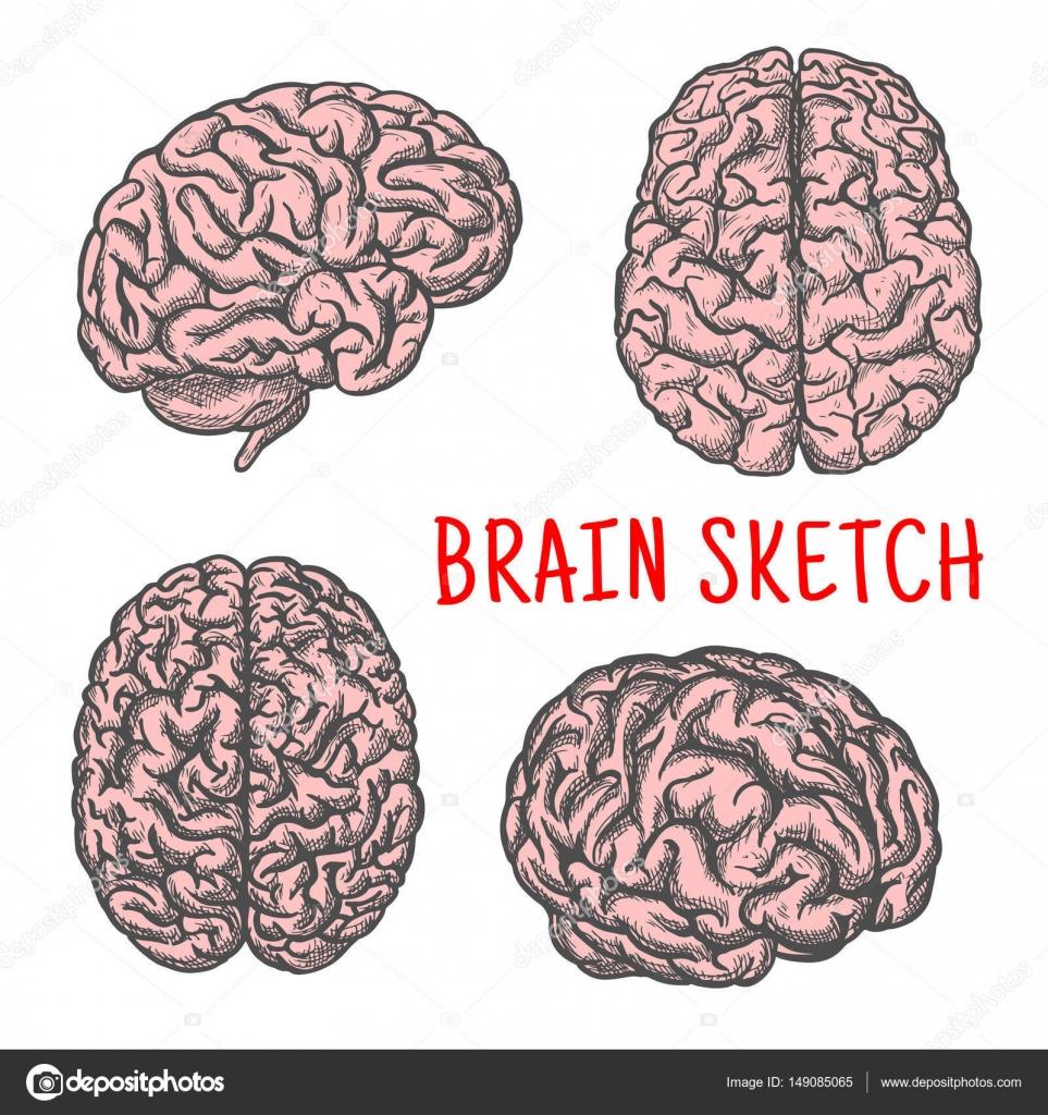 Icono de cerebro humano órgano vector dibujo — Vector de stock ...