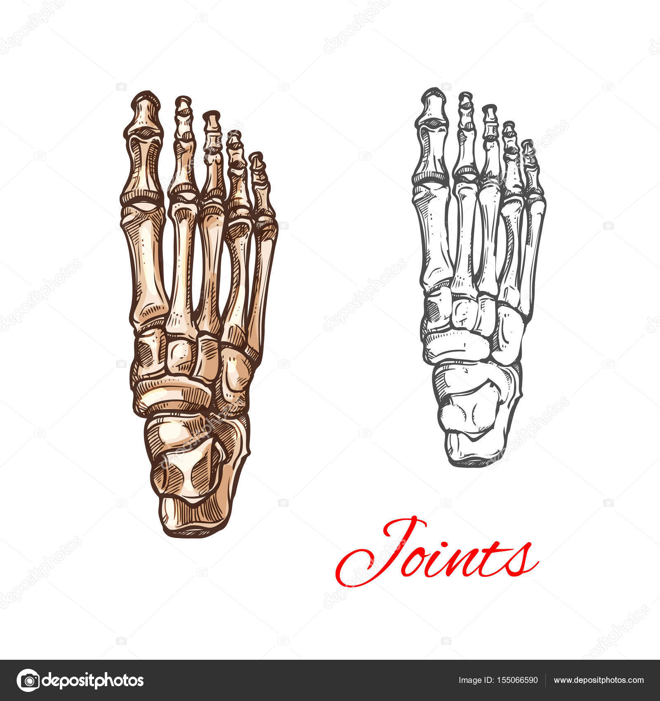 Icono de dibujo vectorial de pie los huesos o las articulaciones ...