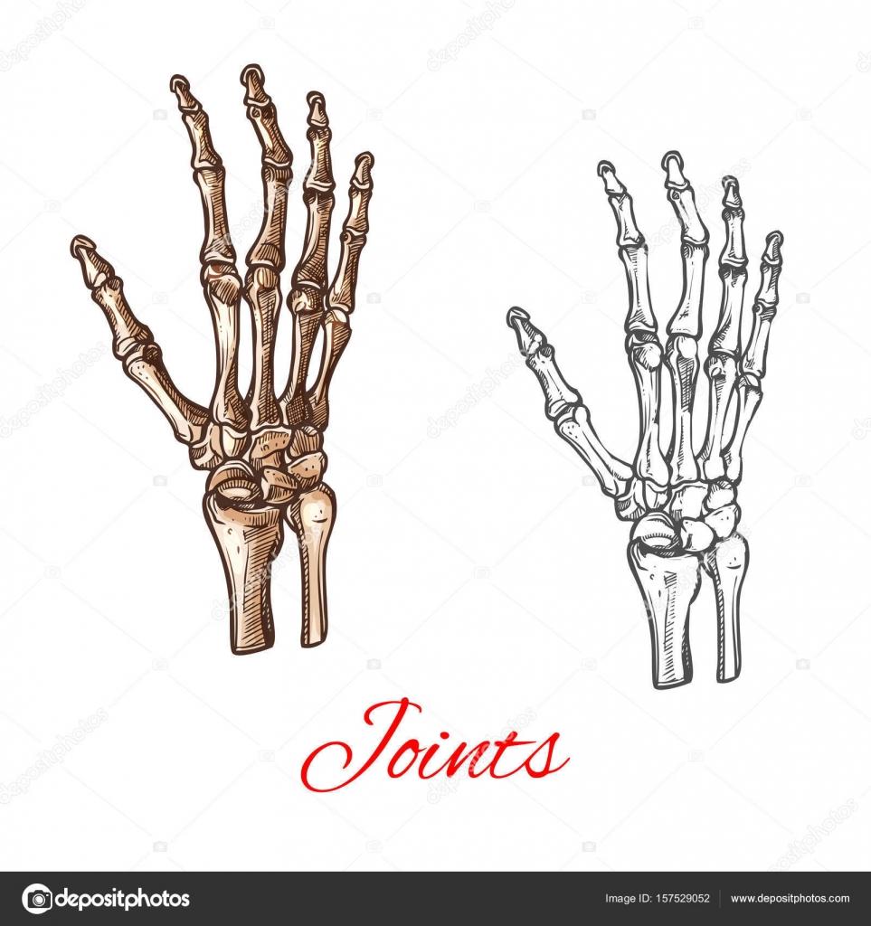 Icono de dibujo vectorial de huesos de la mano humana o de las ...