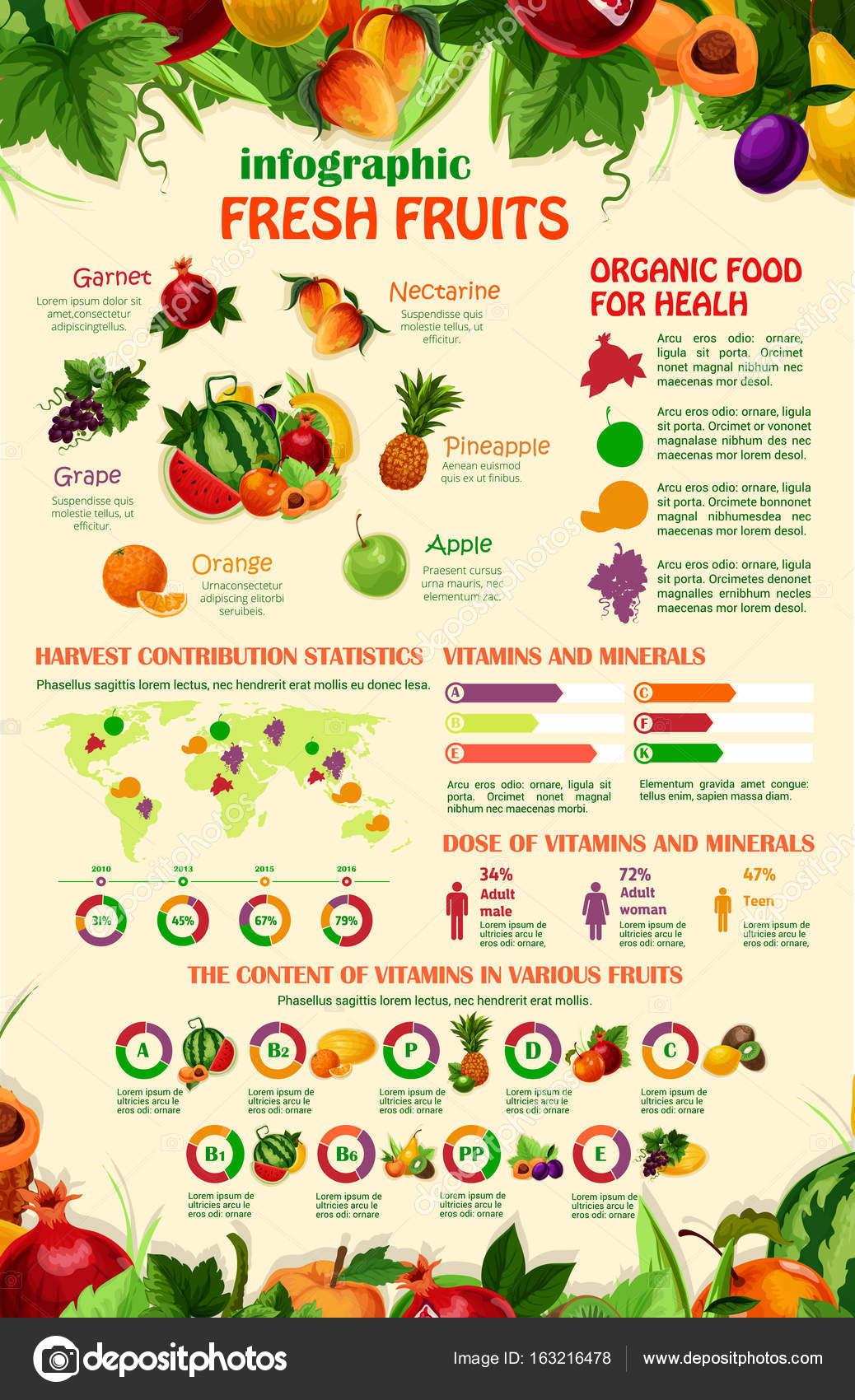 Vektor-Infografiken-Vorlage der exotische Garten Früchte ...