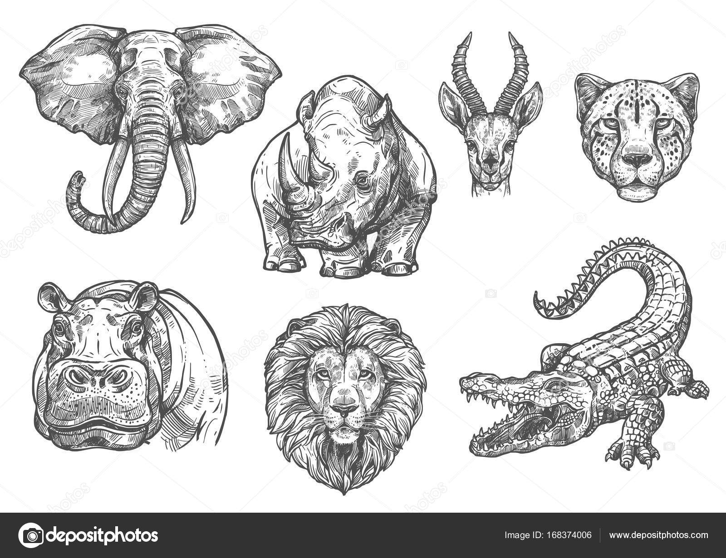 Vektor-Skizze-Zoo-wilde afrikanische Tiere-icons — Stockvektor ...