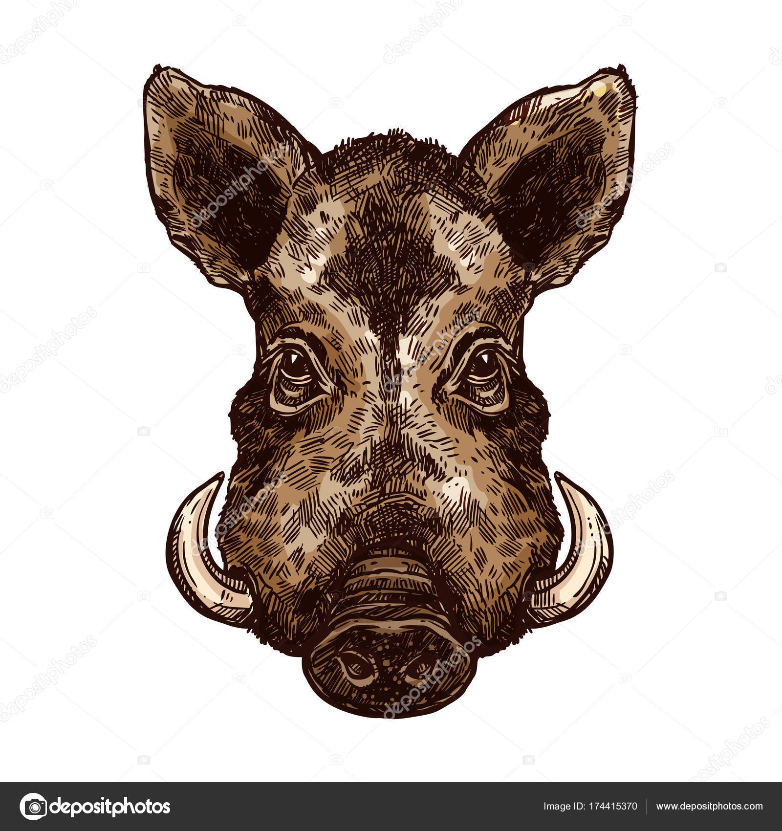 Boar pig or hog wild animal isolated sketch stock vector boar pig or hog wild animal isolated sketch stock vector 174415370 biocorpaavc