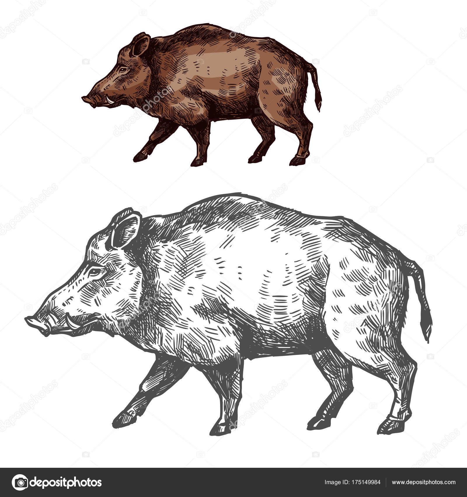 javali aper focinho vetor desenho animal selvagem vetor de stock