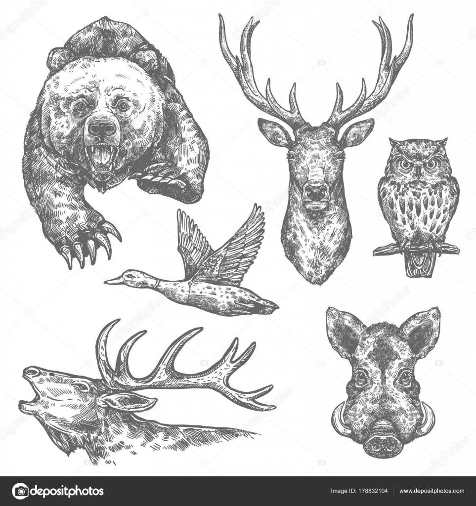 Dibujos de animales y aves de caza salvaje — Archivo Imágenes ...