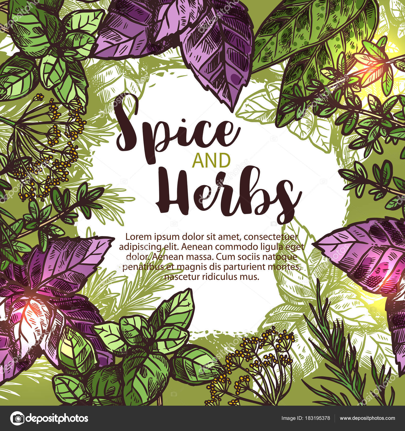 Especias y hierbas póster con marco de planta fresca — Archivo ...