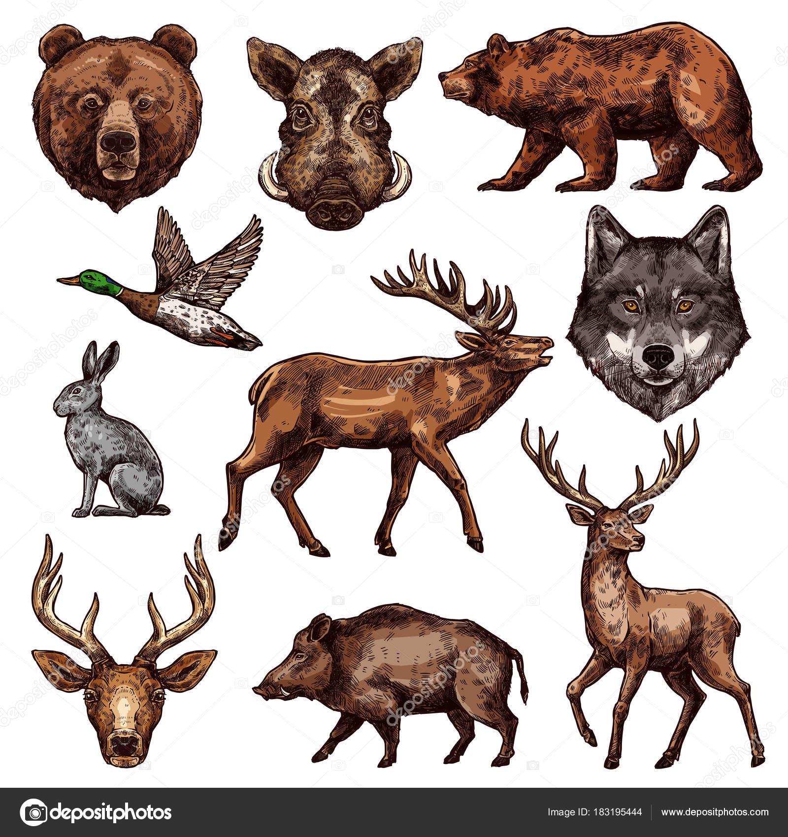 Oiseaux et animaux sauvage dessin pour la conception de la chasse — Image vectorielle Seamartini ...