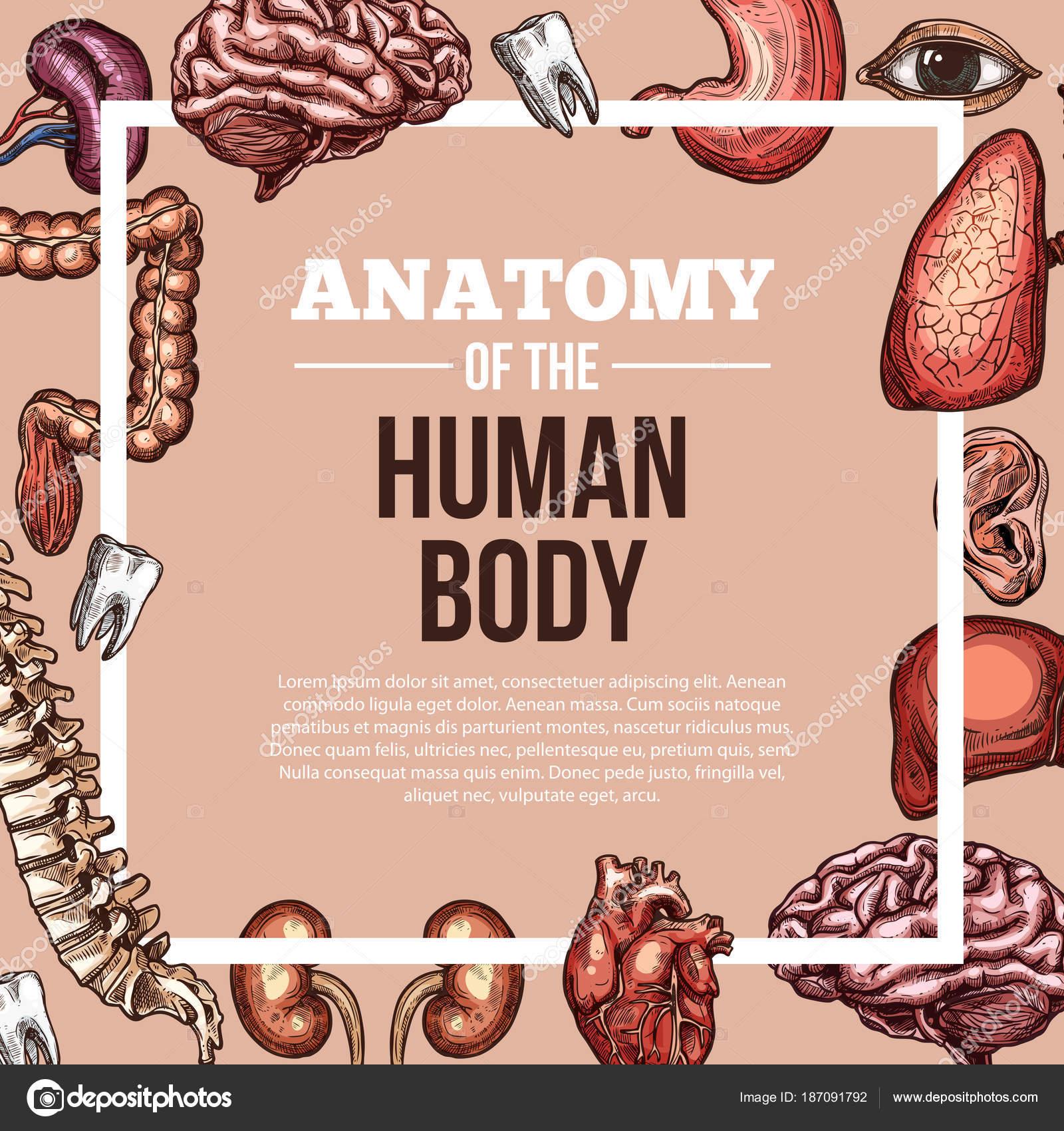 Vector de órganos humanos boceto cartel de anatomía del cuerpo ...
