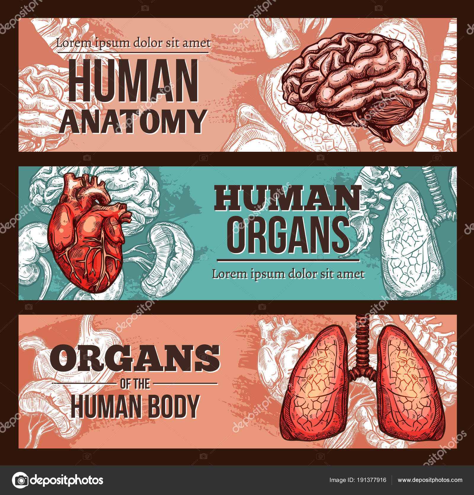 Anatomía del órgano humano bosquejo banner con partes del cuerpo ...