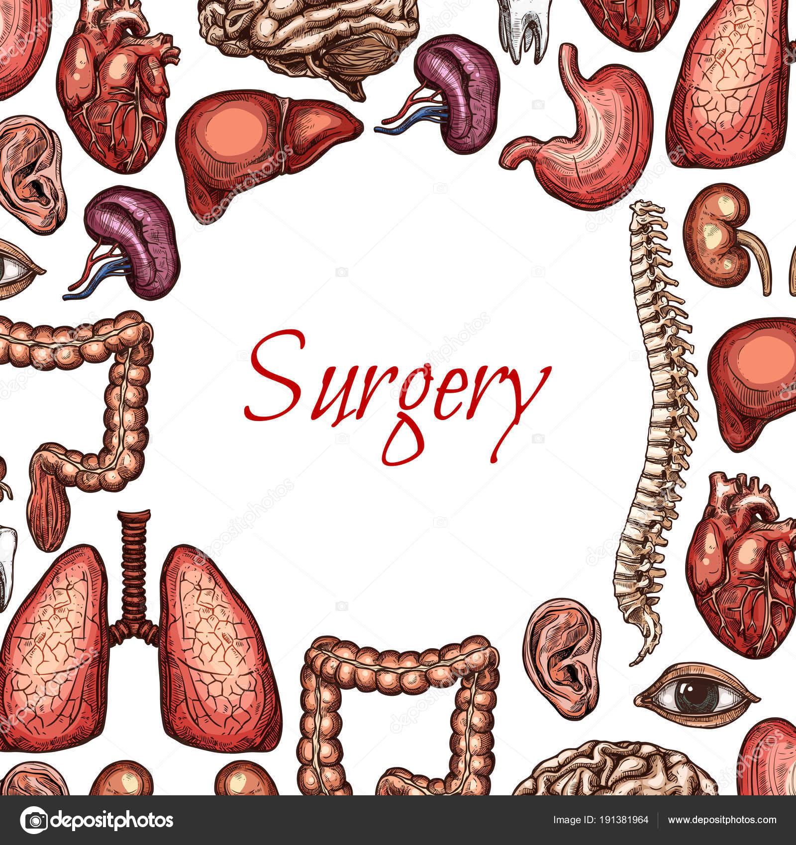 Chirurgie-Poster mit menschliche Organ, skizzieren Sie Körperteile ...