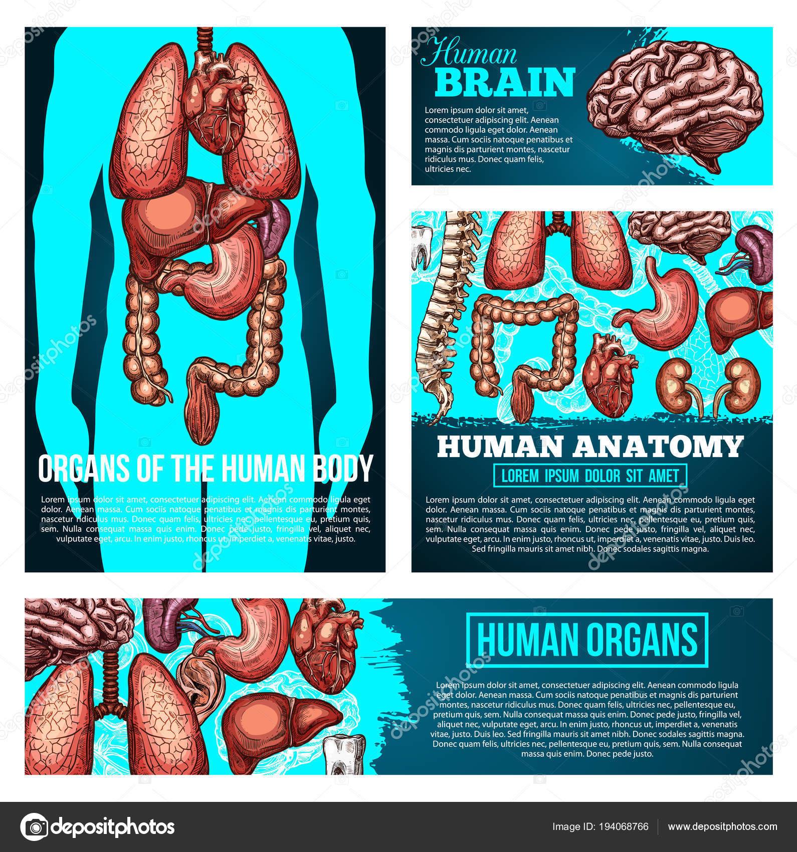Bandera de anatomía del cuerpo humano con órgano, esbozo de hueso ...