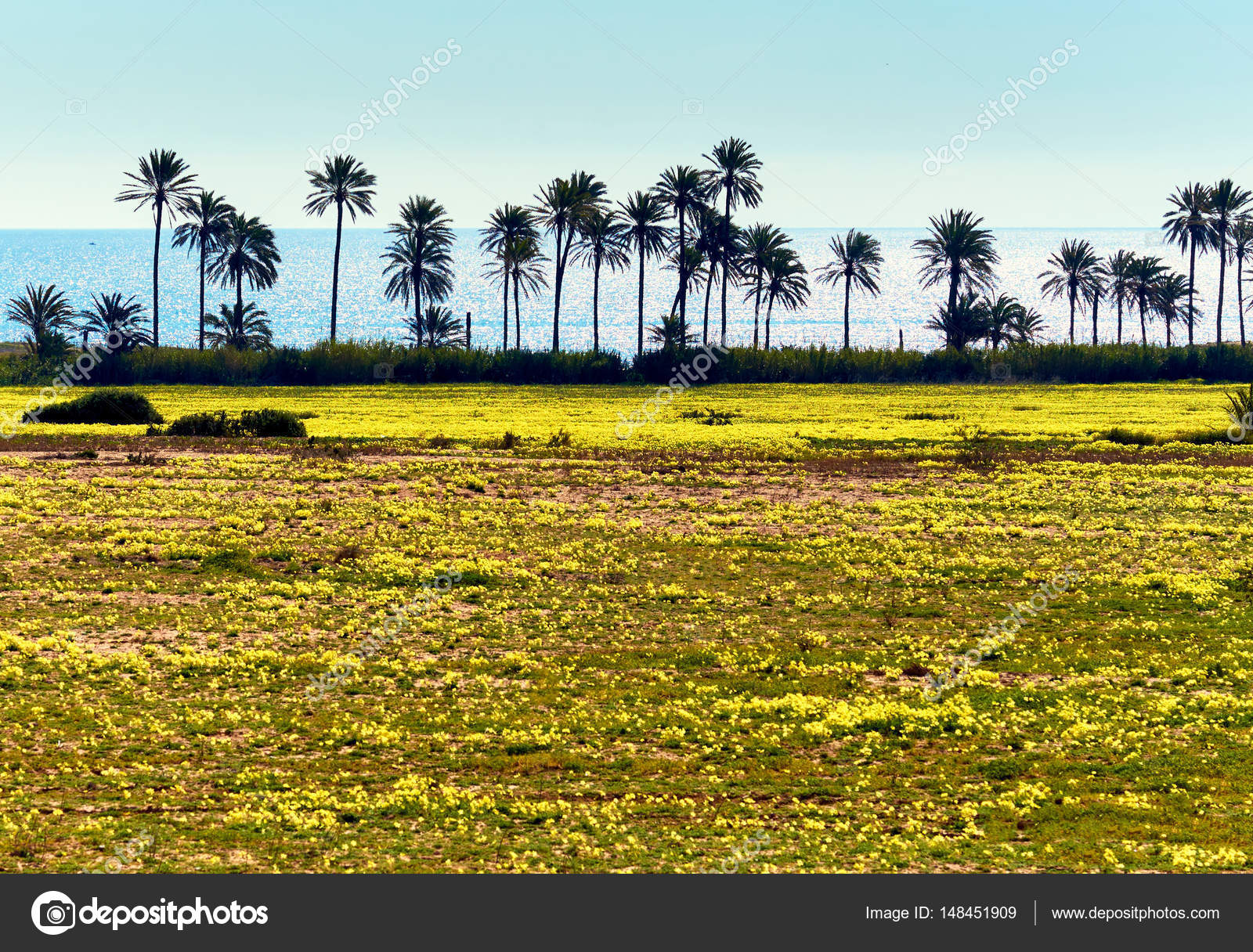 Lawn with a bright yellow flowers and palm trees south of spain lawn with a bright yellow flowers and palm trees south of spain stock photo mightylinksfo