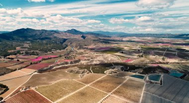 Aerial photography of a blossoming of fruit trees in Cieza