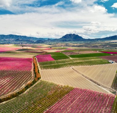 Blossoming of fruit trees in Cieza