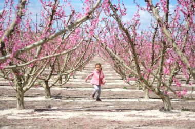 Lovely little girl in a grove of fruit trees in Cieza in the Murcia region. Peach, plum and nectarine trees. Spain