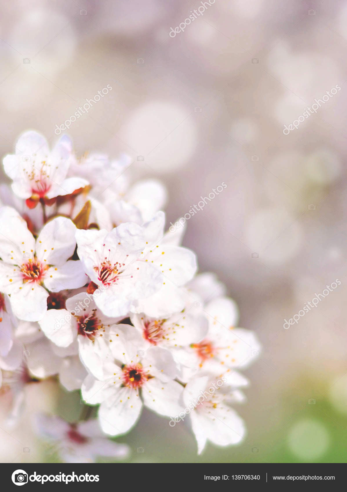 Beautiful spring cherry tree with flowers and bokeh stock photo beautiful spring cherry tree with flowers and bokeh photo by alexis84 izmirmasajfo