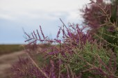 Světlé keř kvete v poušti