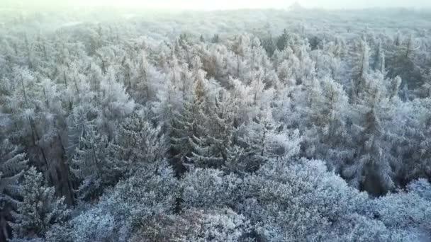 Zasněžené zimní les s ptačí pohled