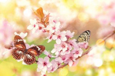 "Картина, постер, плакат, фотообои ""spring blossoms with exotic butterfly."", артикул 150718494"