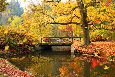 """Картина, постер, плакат, фотообои """"осенний лес. красивые сельские пейзажи . цветы"""", артикул 170705792"""