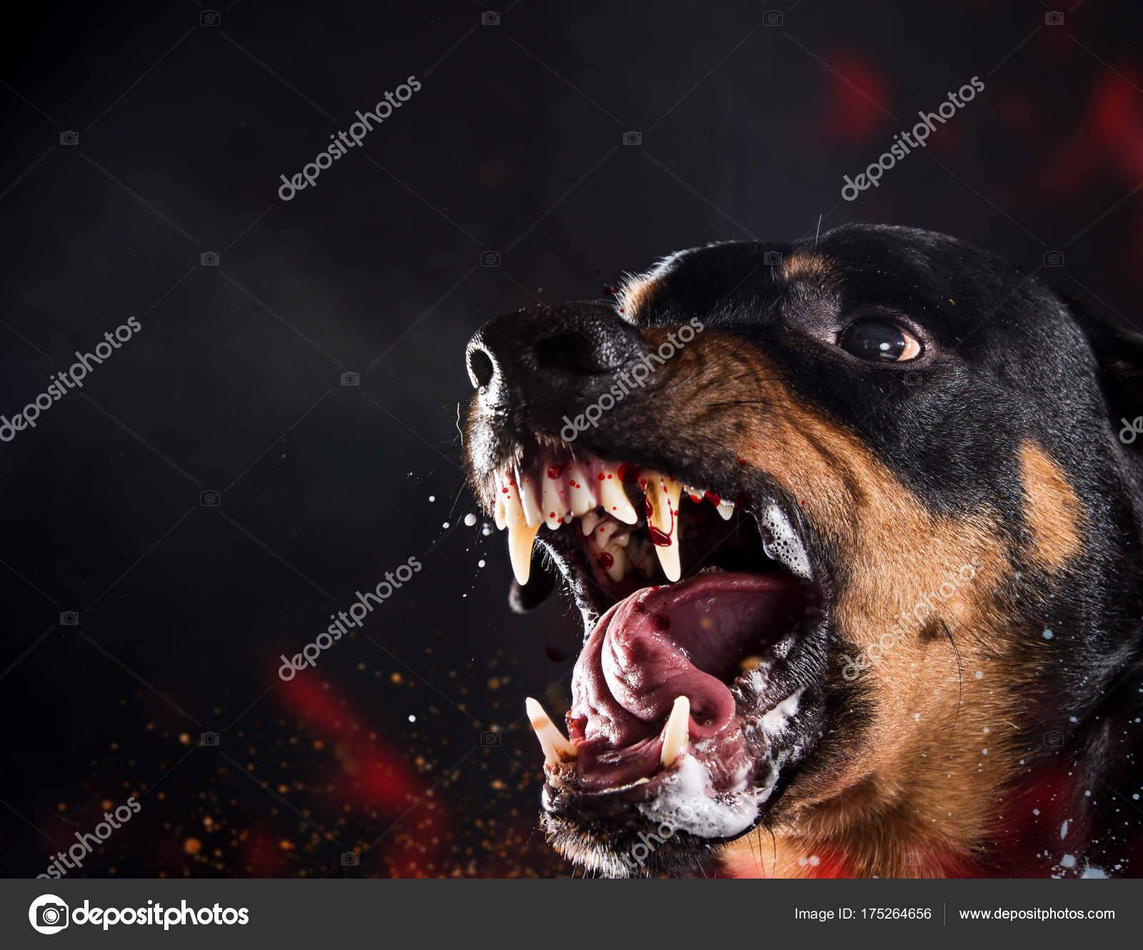 Rottweiler Böse