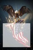 Fotografie American Bald Eagle flying with Flag.