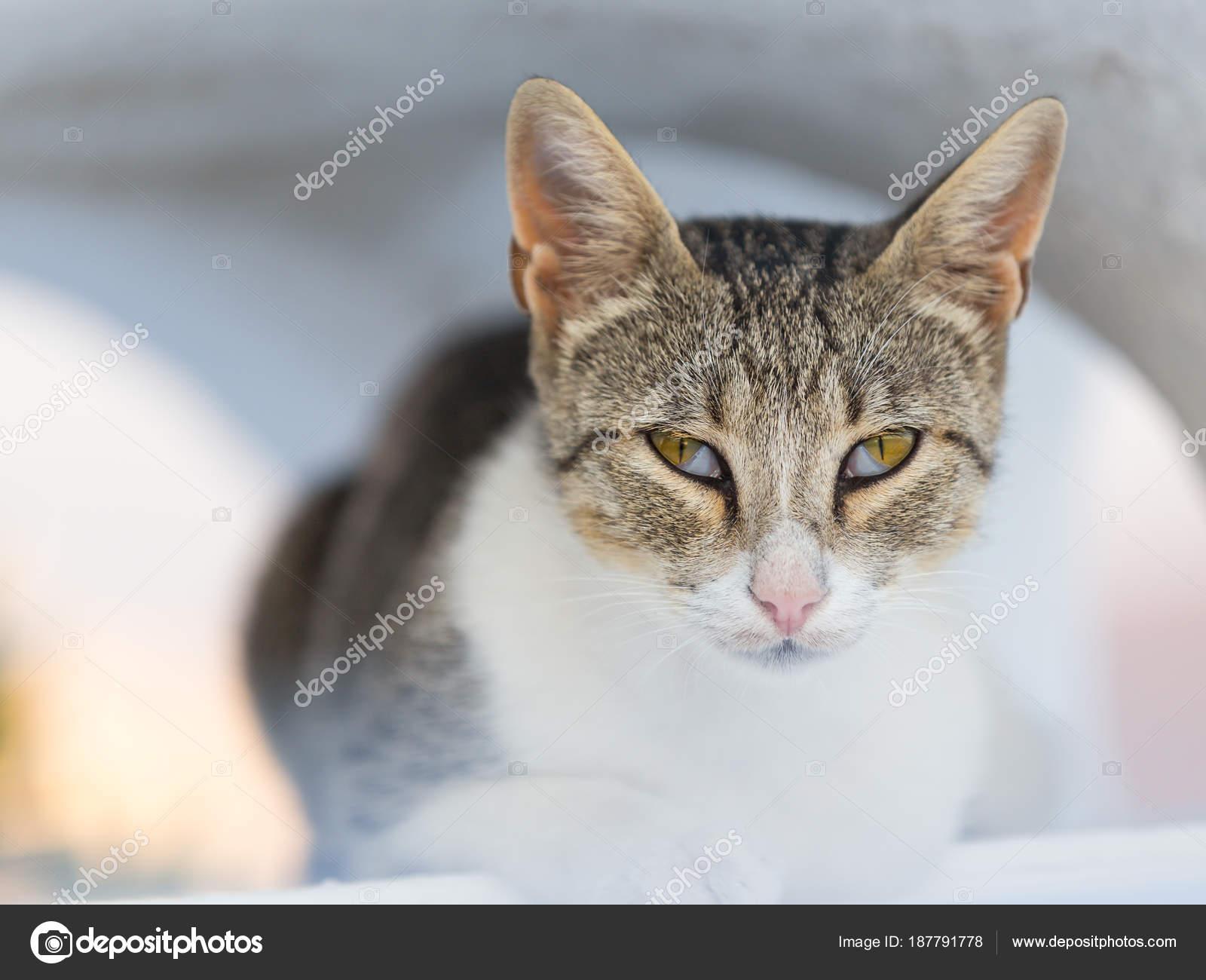 Gros livre de chatte