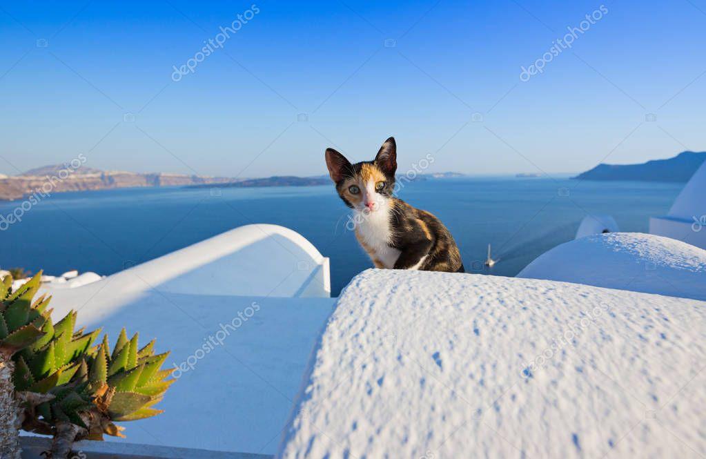 Close-up of cat on Santorini island, Greece