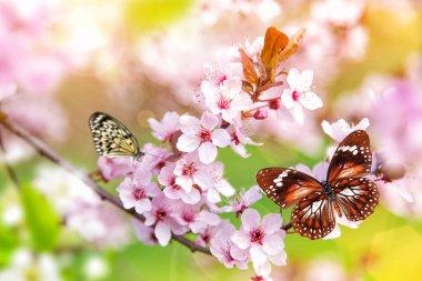"Картина, постер, плакат, фотообои ""spring blossoms with exotic butterfly."", артикул 193071426"