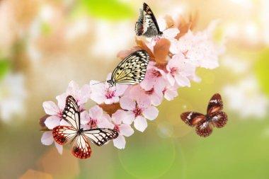 "Картина, постер, плакат, фотообои ""spring blossoms with exotic butterfly."", артикул 193071468"