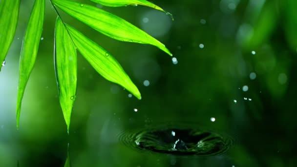 frische grüne Blätter mit Wassertropfen über dem Wasser, Entspannung mit Wassertropfen-Konzept, Zeitlupe