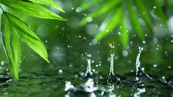 friss zöld levelek vízcseppekkel a víz felett, kikapcsolódás vízhullám csepp koncepcióval, lassított felvétel