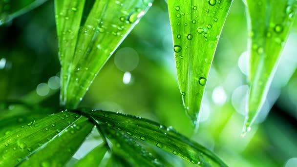 svěží zelené listy s kapkami vody nad vodou, relaxace s koncepcí zvlnění kapek vody, zpomalení