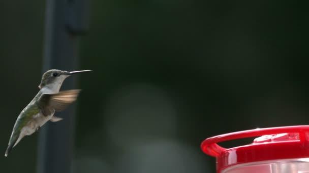 Kolibřík zpomalené letící krmítko