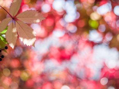 """Картина, постер, плакат, фотообои """"размытые красные листья. природа. постеры картины модульные фотографии графика"""", артикул 128090422"""