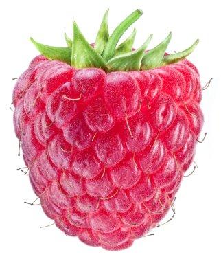 Ripe raspberry on the white background.