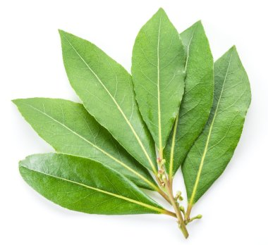 Bay leaf isolated on the white background.