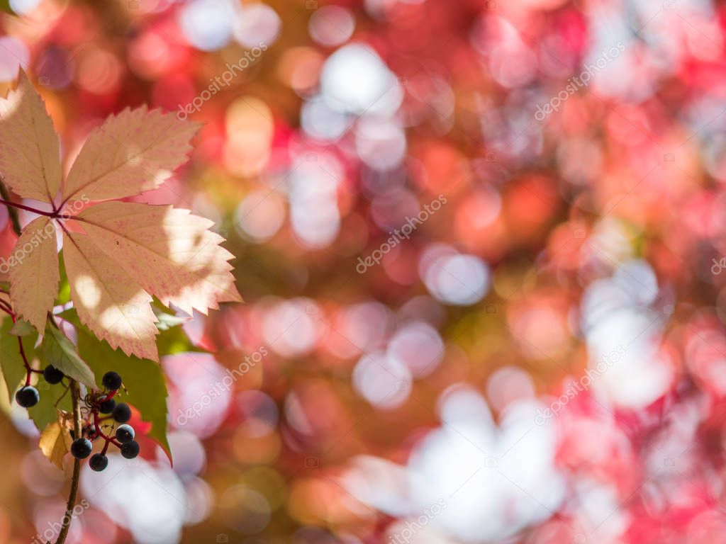 Blurred red leaves. Nature background.