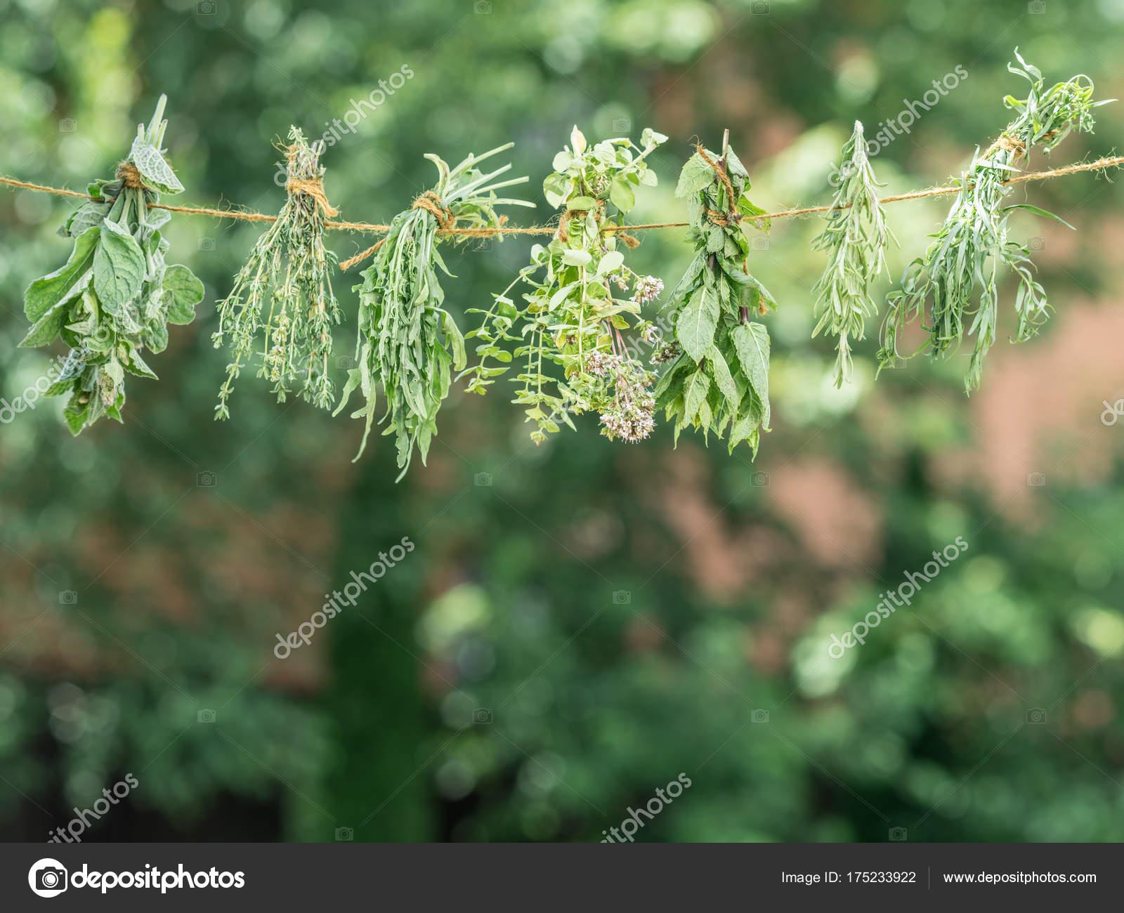 Bündel Von Aromatisierten Kräuter Trocknen An Der Frischen Luft