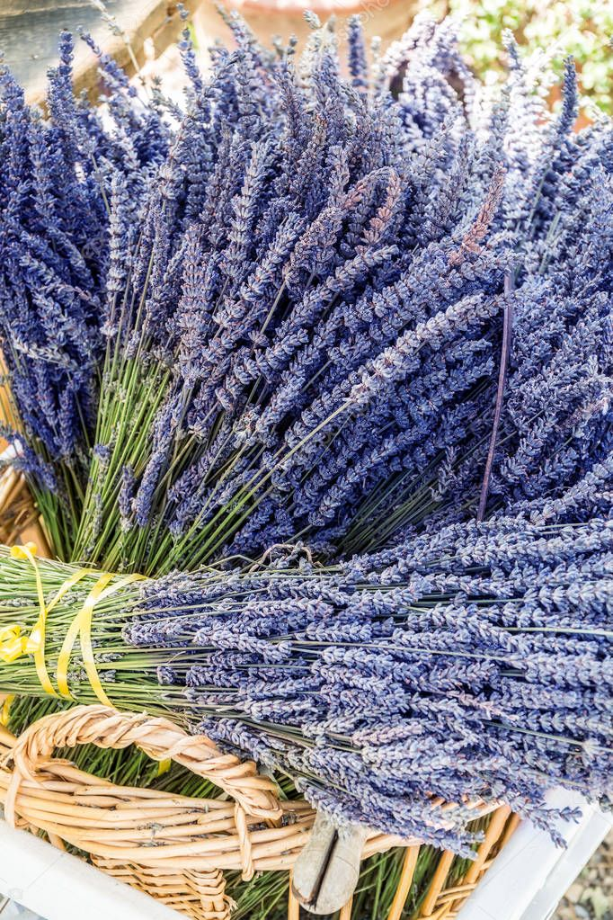 Dry bunches of lavender flowers. Close-up.
