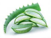 Aloe nebo Aloe vera čerstvé listy a plátky na bílém pozadí