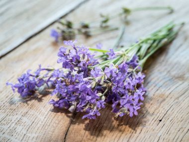 Lavandula or lavender flowers on the wooden background.
