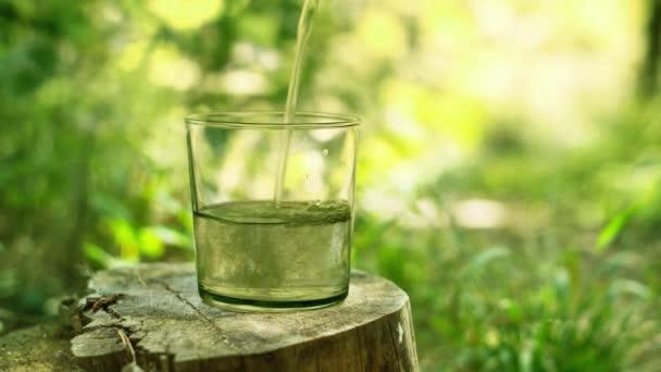 Proud vody se nalije do sklenice, která stojí na pařezu v lese.