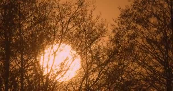 Red Sun at sunset among the branches of trees.