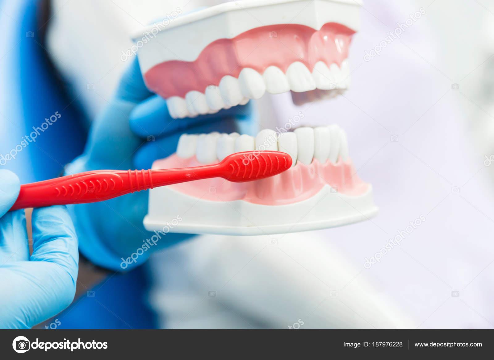 0362eccff Dentista mostra como limpar os dentes — Fotografia de Stock