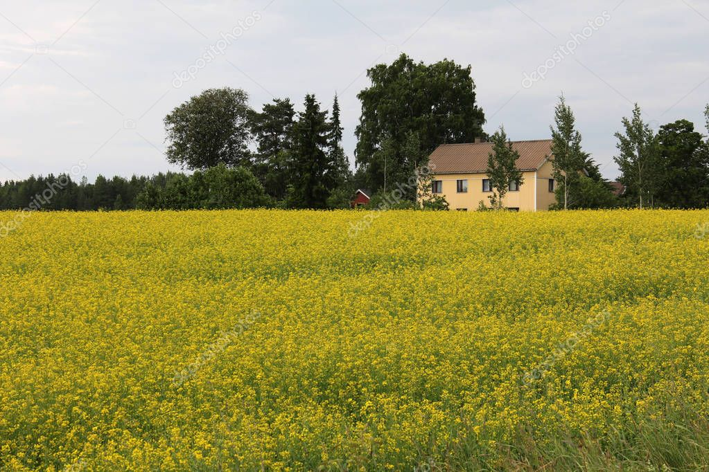 Village and field