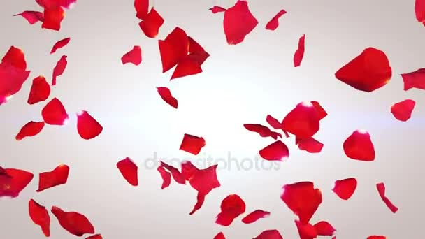 Okvětní lístky červené růže