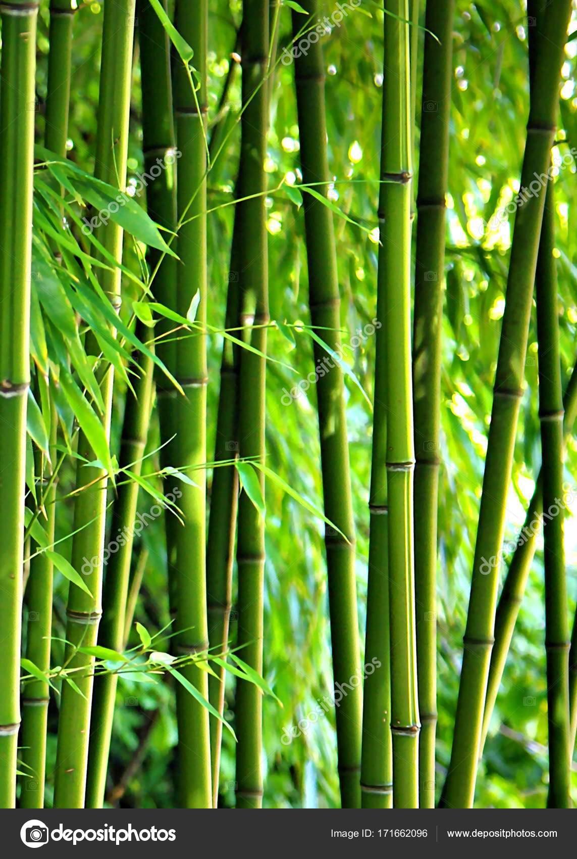 bambus staebe gruen foto de stock gabii40 171662096. Black Bedroom Furniture Sets. Home Design Ideas