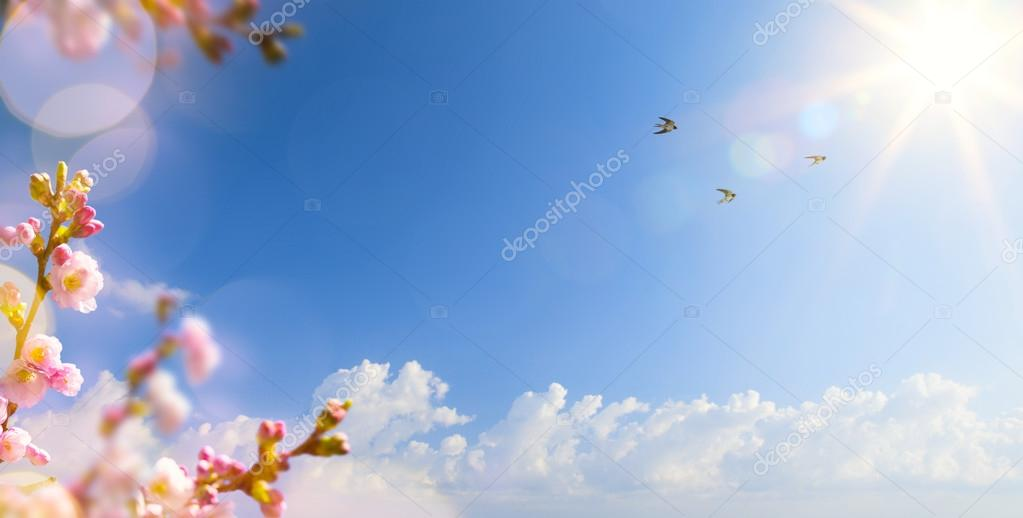 abstract Spring landscape background with flying birds and Sprin