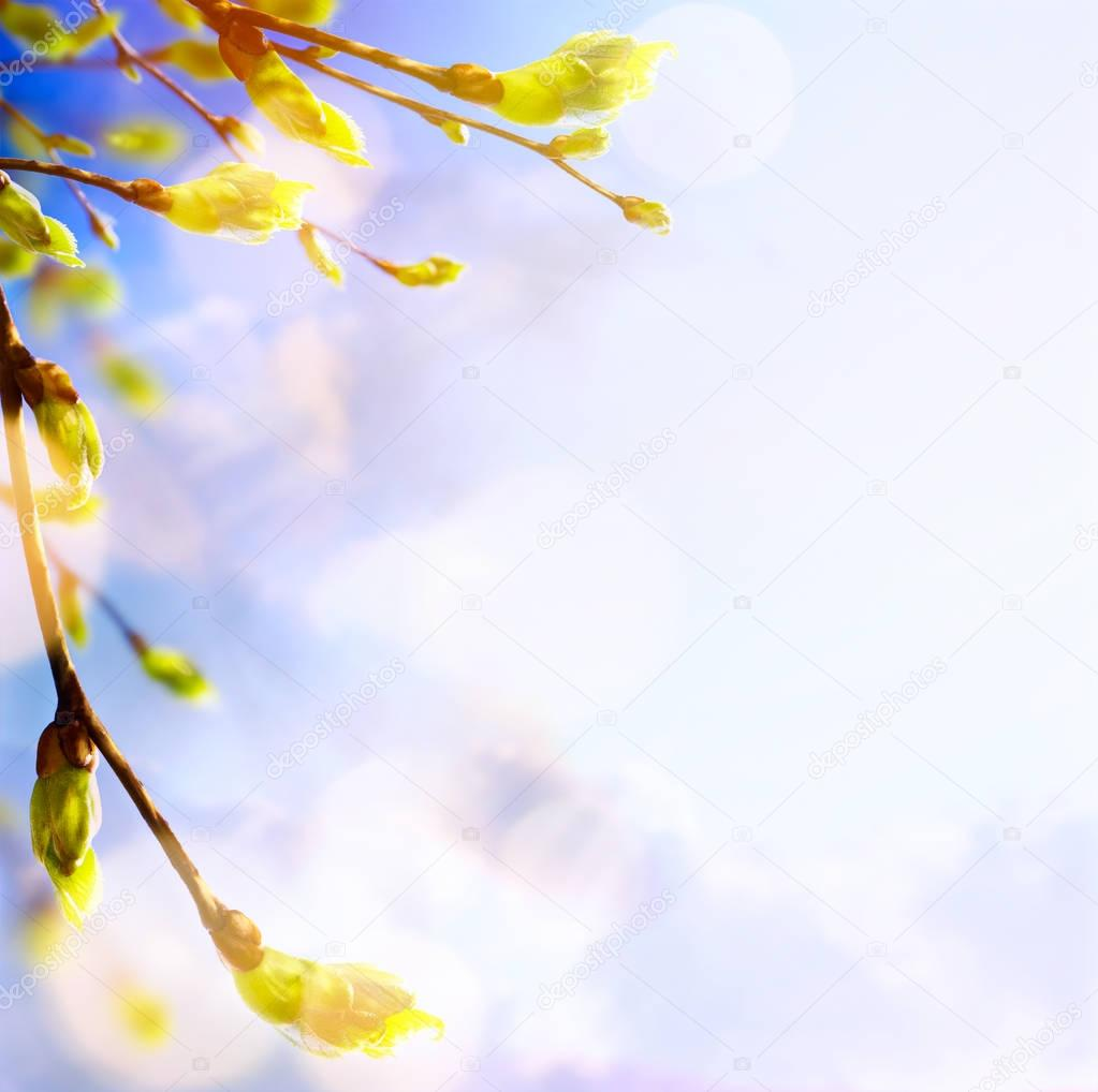 Spring tree buds and young leaves; spring background